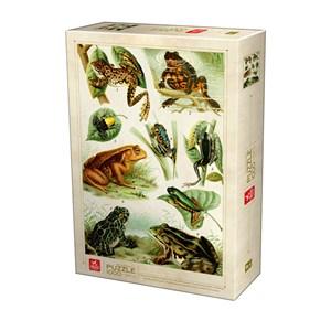 """Deico (75703) - """"Frogs"""" - 1000 pieces puzzle"""